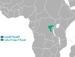 "<span class=""translation_missing"" title=""translation missing: en.medium.untitled.map_image_of, page_name: Eastern Gorilla"">Map Image Of</span>"