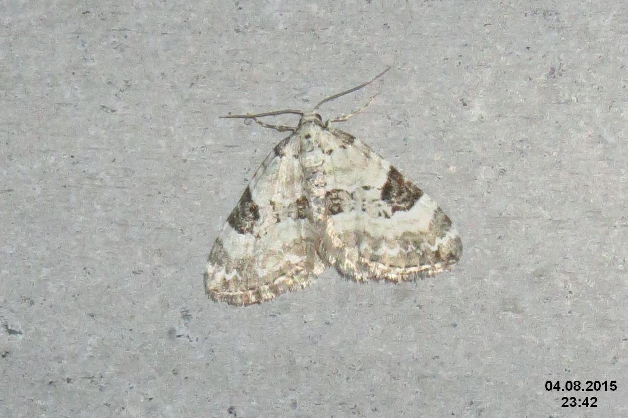 Image of Pretty Pinion