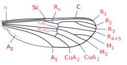 Image of meniscus midges