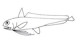 Image of Eucla cod