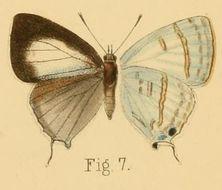 Image of Sinthusa