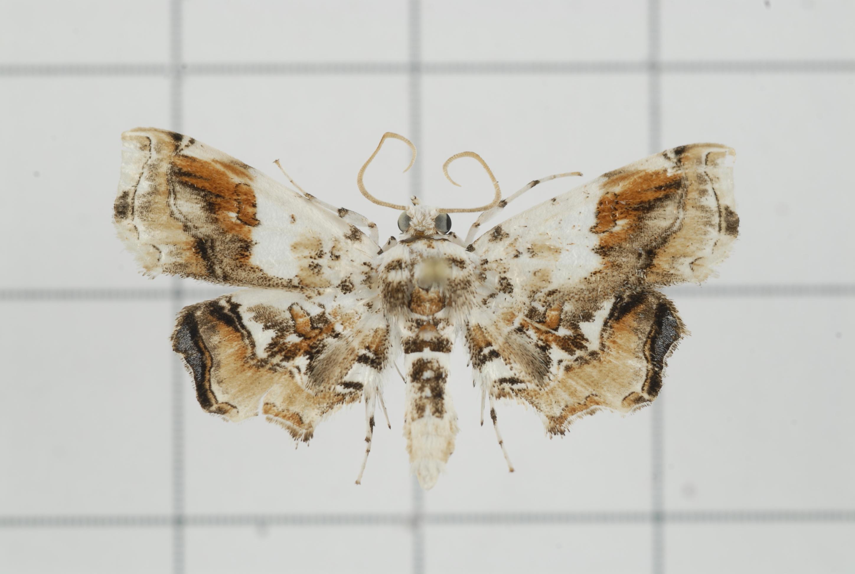 Image of Aeolopetra