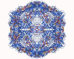 Image of parvo-viruses