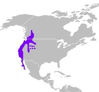 "<span class=""translation_missing"" title=""translation missing: en.medium.untitled.map_image_of, page_name: Callipepla Wagler 1832"">Map Image Of</span>"