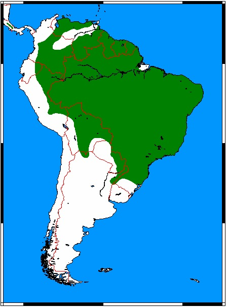 Map of Little Spotted Cat