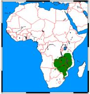 "<span class=""translation_missing"" title=""translation missing: en.medium.untitled.map_image_of, page_name: Meller&#39;s Mongoose"">Map Image Of</span>"