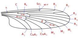 Image of primitive crane flies