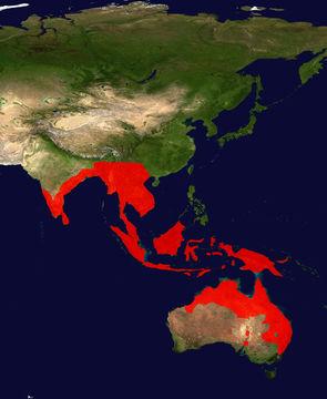 "<span class=""translation_missing"" title=""translation missing: en.medium.untitled.map_image_of, page_name: Black-necked stork"">Map Image Of</span>"