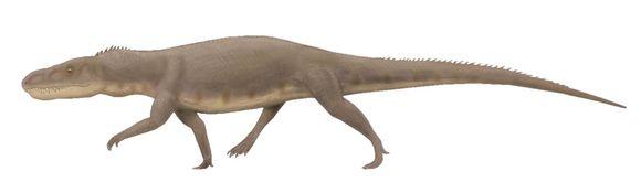 Image of Erythrosuchidae