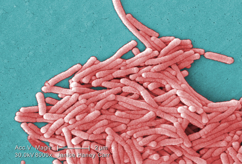 Image of <i>Legionella pneumophila</i>