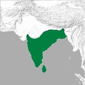 Map of Leptocoma Cabanis 1850