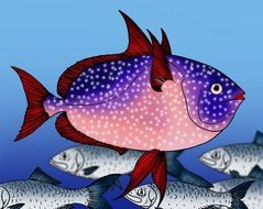 Image of opah