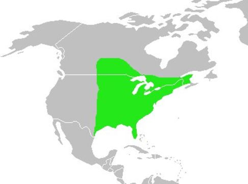 "<span class=""translation_missing"" title=""translation missing: en.medium.untitled.map_image_of, page_name: Brown thrasher"">Map Image Of</span>"