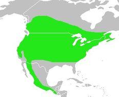 "<span class=""translation_missing"" title=""translation missing: en.medium.untitled.map_image_of, page_name: Evening Grosbeak"">Map Image Of</span>"