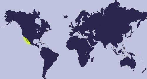 "<span class=""translation_missing"" title=""translation missing: en.medium.untitled.map_image_of, page_name: &lt;i&gt;Pseudozonaria annettae&lt;/i&gt; (Dall 1909)"">Map Image Of</span>"