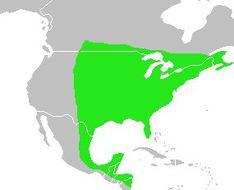 Map of Bluebird