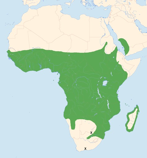 """<span class=""""translation_missing"""" title=""""translation missing: en.medium.untitled.map_image_of, page_name: African Palm-Swift"""">Map Image Of</span>"""