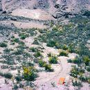 Image of desert yellowhead