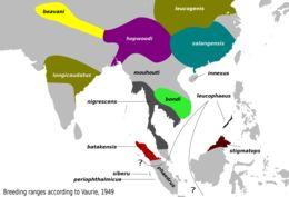 Map of Ashy Drongo