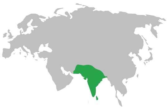 Map of Common Sand Boa