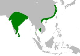 "<span class=""translation_missing"" title=""translation missing: en.medium.untitled.map_image_of, page_name: Painted Stork"">Map Image Of</span>"