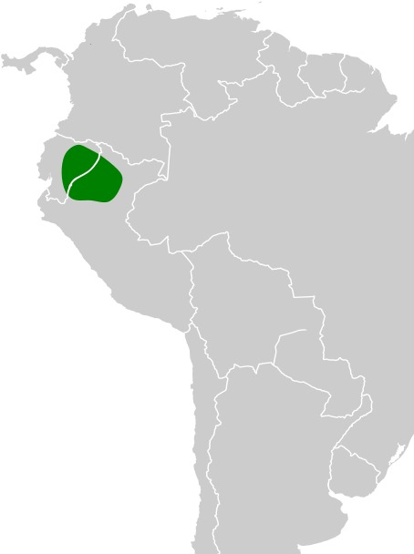 "<span class=""translation_missing"" title=""translation missing: en.medium.untitled.map_image_of, page_name: Ecuadorian Cacique"">Map Image Of</span>"