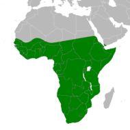 "<span class=""translation_missing"" title=""translation missing: en.medium.untitled.map_image_of, page_name: Black-headed Heron"">Map Image Of</span>"