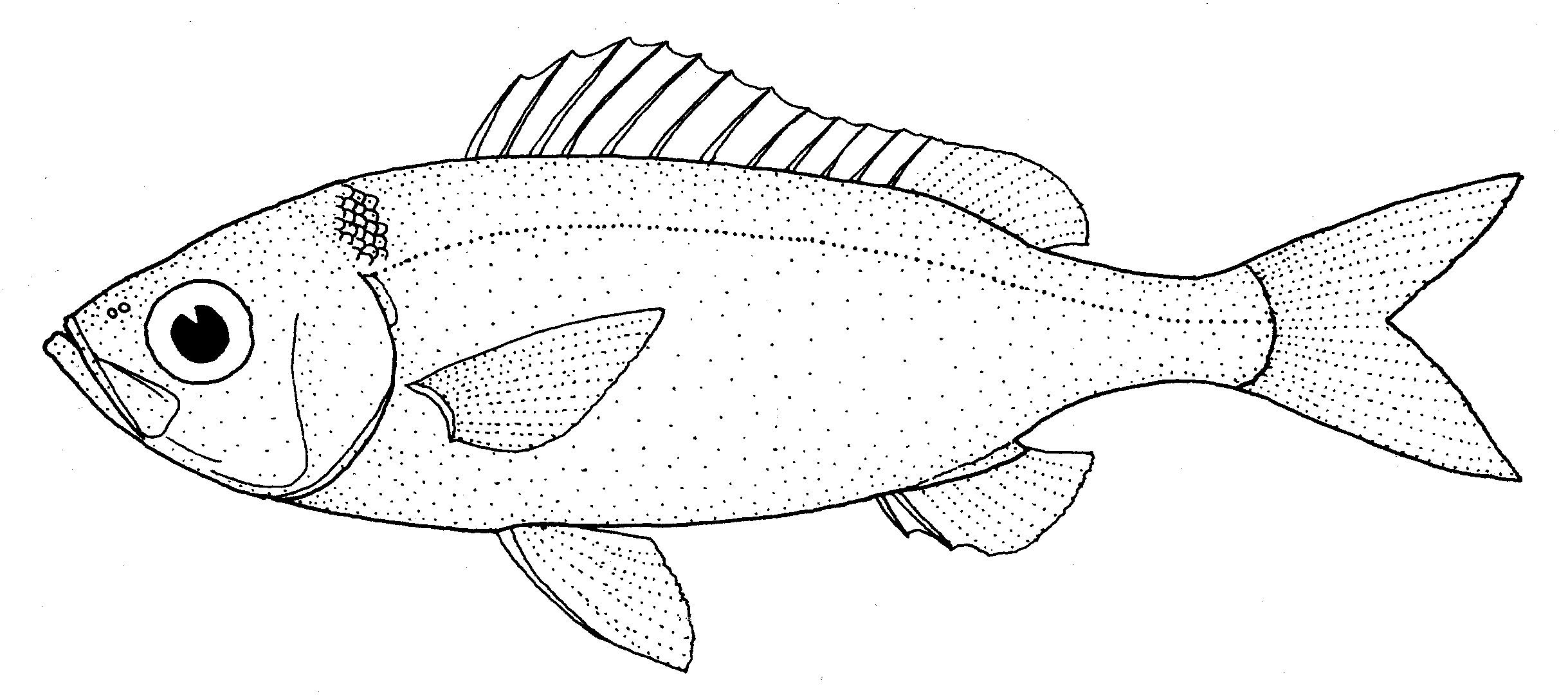 Image of Rubyfish