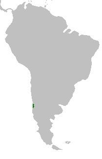 """<span class=""""translation_missing"""" title=""""translation missing: en.medium.untitled.map_image_of, page_name: &lt;i&gt;Gomortega keule&lt;/i&gt; (Mol.) Gunckel"""">Map Image Of</span>"""