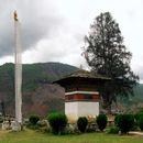 Image of Bhutan Cypress