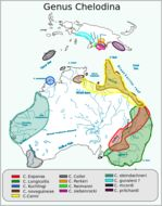 Map of New Guinea Snake-necked Turtle