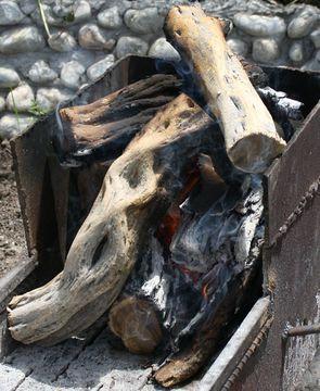 Image of Black saxaul