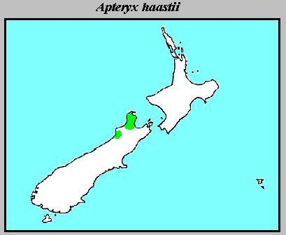 "<span class=""translation_missing"" title=""translation missing: en.medium.untitled.map_image_of, page_name: Great Spotted Kiwi"">Map Image Of</span>"