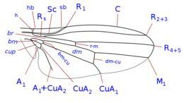 Image of bird flies