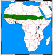 """<span class=""""translation_missing"""" title=""""translation missing: en.medium.untitled.map_image_of, page_name: African Sand Fox"""">Map Image Of</span>"""