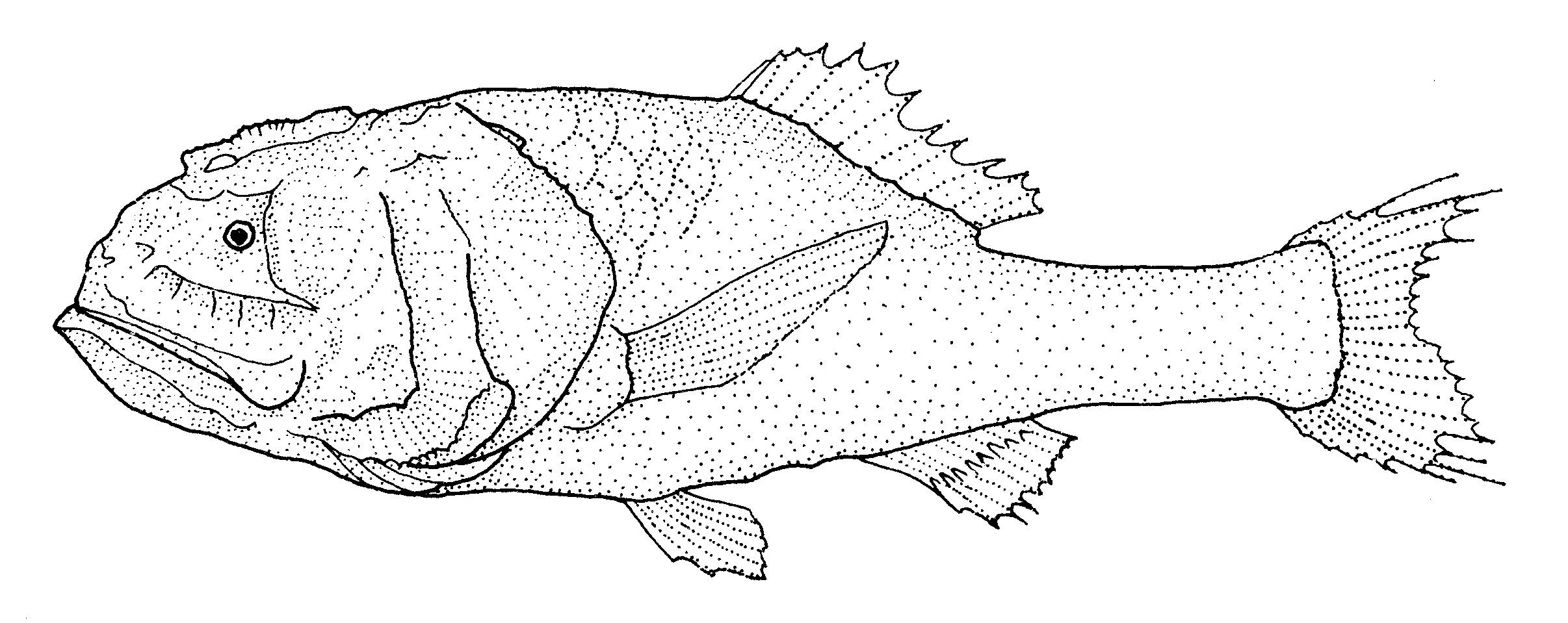 Image of <i>Poromitra oscitans</i> Ebeling 1975