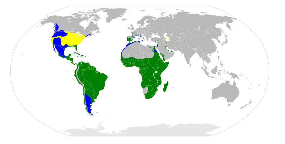 "<span class=""translation_missing"" title=""translation missing: en.medium.untitled.map_image_of, page_name: Bubulcus Bonaparte 1855"">Map Image Of</span>"