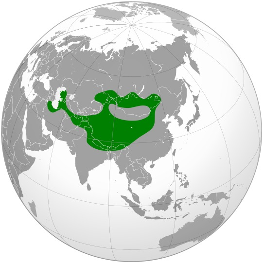 Map of <i>Otocolobus manul</i>