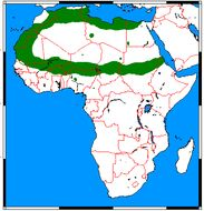 """<span class=""""translation_missing"""" title=""""translation missing: en.medium.untitled.map_image_of, page_name: Ictonyx libyca"""">Map Image Of</span>"""