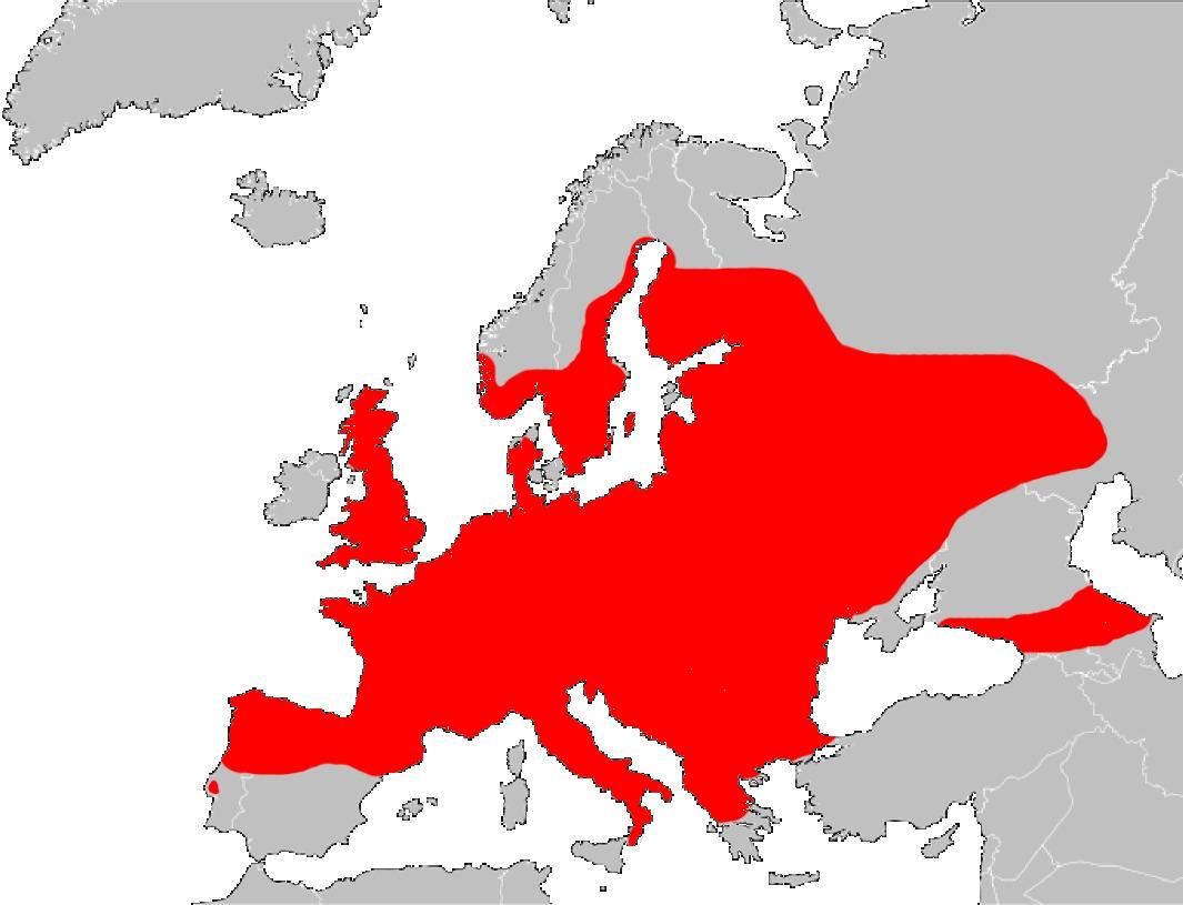 """<span class=""""translation_missing"""" title=""""translation missing: en.medium.untitled.map_image_of, page_name: &lt;i&gt;Anguis fragilis&lt;/i&gt; Linnaeus 1758"""">Map Image Of</span>"""