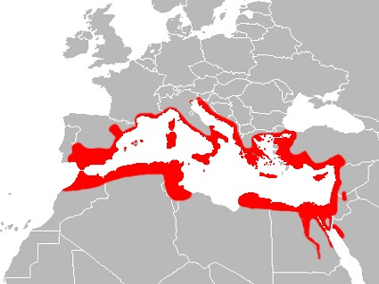 "<span class=""translation_missing"" title=""translation missing: en.medium.untitled.map_image_of, page_name: mediterranean house gecko"">Map Image Of</span>"