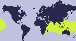 """<span class=""""translation_missing"""" title=""""translation missing: en.medium.untitled.map_image_of, page_name: &lt;i&gt;Erosaria erosa&lt;/i&gt; (Linnaeus 1758)"""">Map Image Of</span>"""