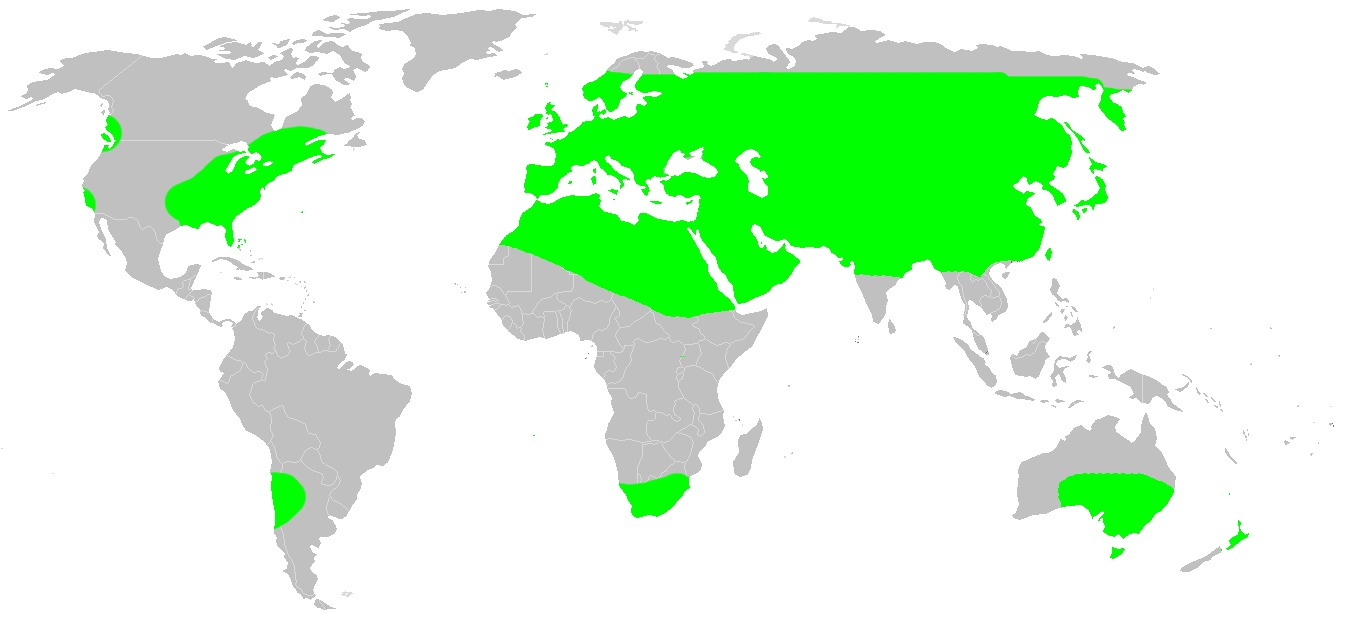 "<span class=""translation_missing"" title=""translation missing: en.medium.untitled.map_image_of, page_name: Dysdera"">Map Image Of</span>"
