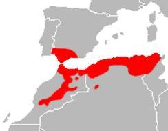 """<span class=""""translation_missing"""" title=""""translation missing: en.medium.untitled.map_image_of, page_name: &lt;i&gt;Podarcis vaucheri&lt;/i&gt; (Boulenger 1905)"""">Map Image Of</span>"""