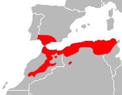 Map of <i>Podarcis vaucheri</i> (Boulenger 1905)