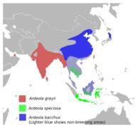 "<span class=""translation_missing"" title=""translation missing: en.medium.untitled.map_image_of, page_name: Javan Pond-Heron"">Map Image Of</span>"
