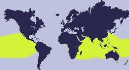 """<span class=""""translation_missing"""" title=""""translation missing: en.medium.untitled.map_image_of, page_name: &lt;i&gt;Cypraea isabella&lt;/i&gt;"""">Map Image Of</span>"""