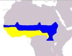 Map of Standard-winged Nightjar