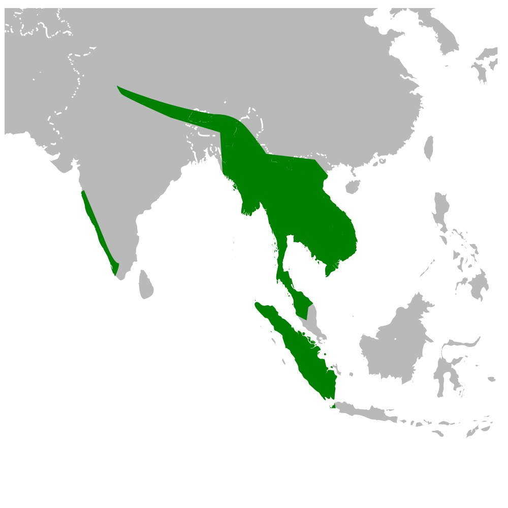 """<span class=""""translation_missing"""" title=""""translation missing: en.medium.untitled.map_image_of, page_name: Great Hornbill"""">Map Image Of</span>"""