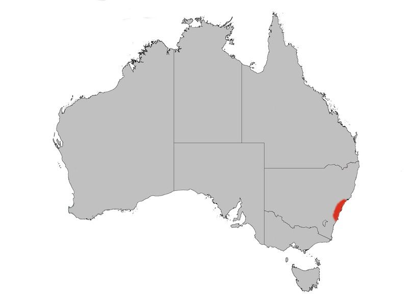 "<span class=""translation_missing"" title=""translation missing: en.medium.untitled.map_image_of, page_name: New South Wales waratah"">Map Image Of</span>"